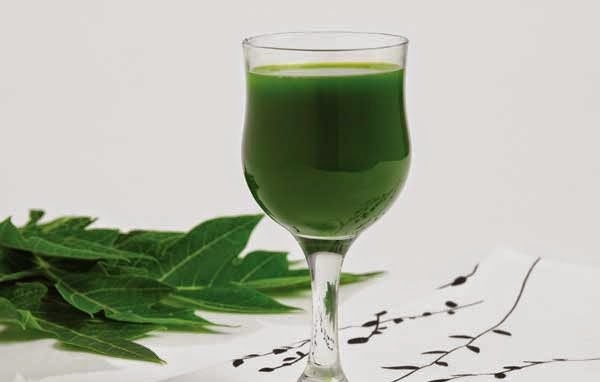 Uống nước lá đu đủ có hại không ?